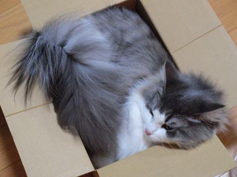 箱入りフレイヤ02(2009.09.03)