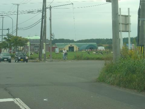 牛さん(2009.09.04)