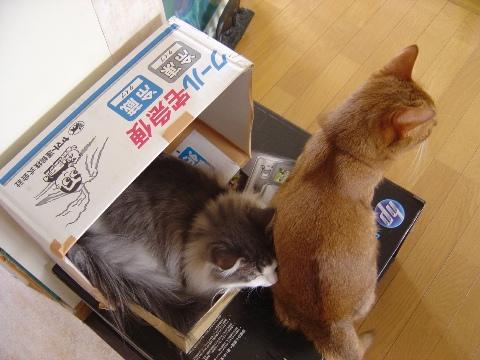 新物件05(2009.09.04)