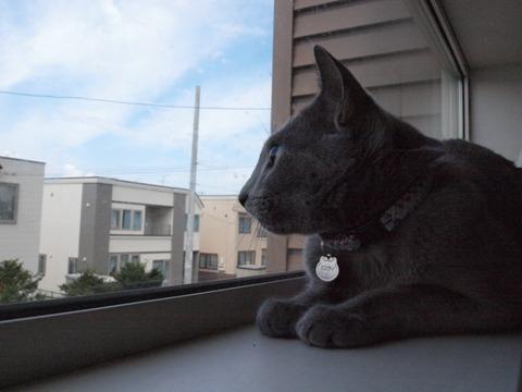 ニコとトンビ04(2009.09.06)