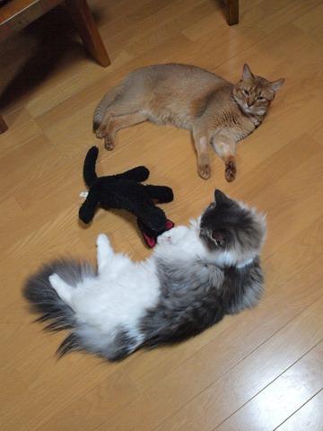 ごろごろガールズ03(2009.09.15)