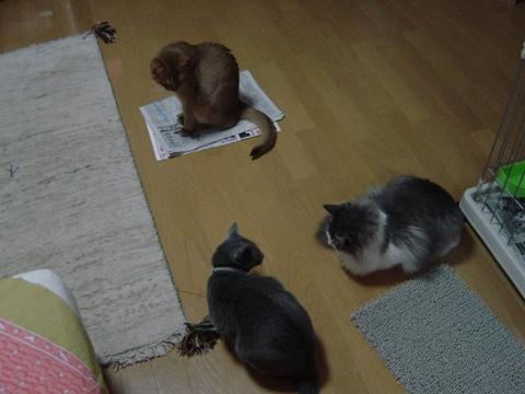 ニコジョゼフレイ01(2009.09.15)