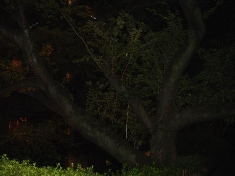 樹齢100年超(2009.09.21)