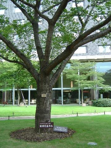 標準木(2009.09.23)