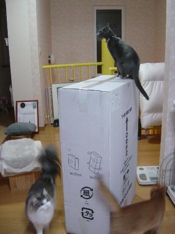 ごみばこ01(2009.10.03)