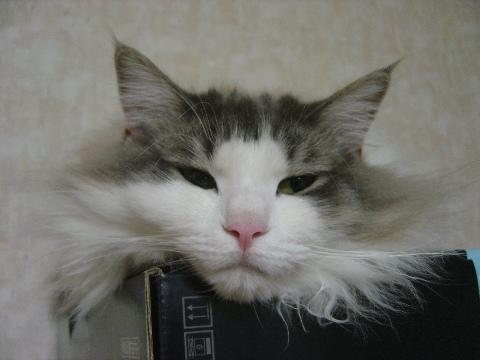 つぶれフレイヤ(2009.10.09)