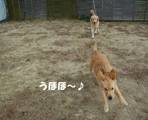 うほほ?♪(091130)