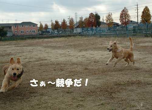 競争(091130)