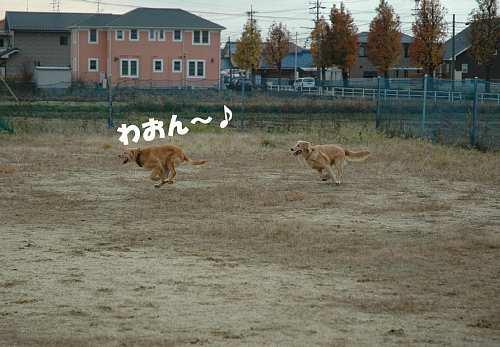走ってる(091130)