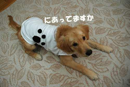 服着てるララ(091204)