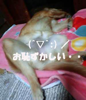 お恥ずかしい寝相(091210)