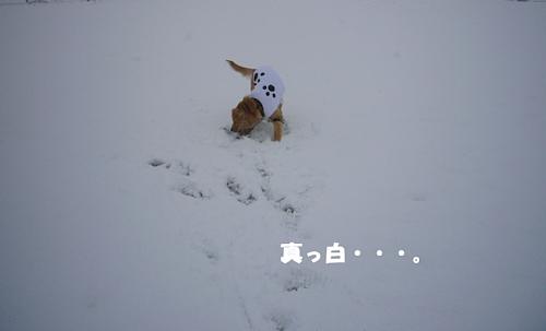 真っ白(091220)