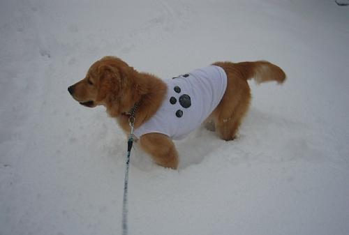 雪で遊ぶ(20100101)