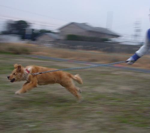 ララ走る1(2010.0113)