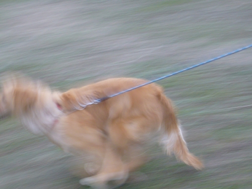ララ走る3(20100113)