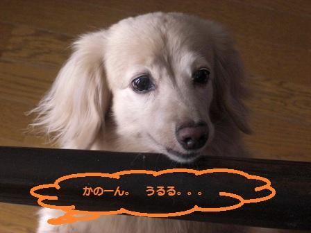 BABAB 002