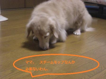 20111026006.jpg