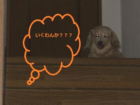 ACAC007.jpg