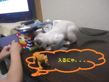 CAA011.jpg