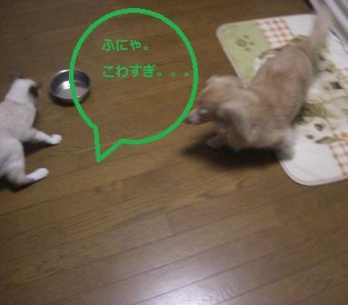 kowai008.jpg