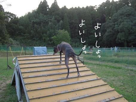 ドッコイショーーーーーッ!!!