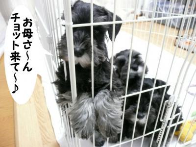 ダイアンっ子12月18日3