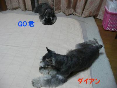 GOダイアン8月10日-s