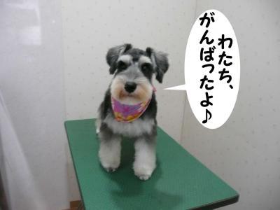 小春ちゃん9月11日2