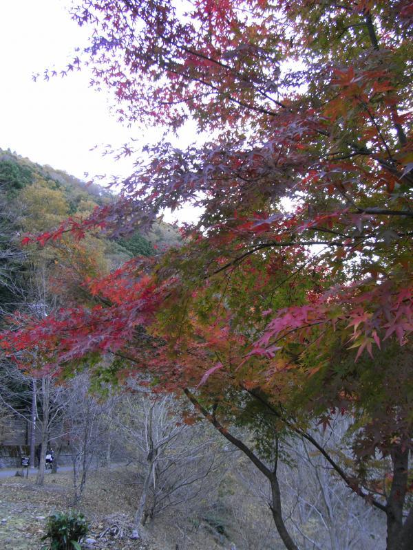 紅葉は真っ盛りからこれからのモノまでありました