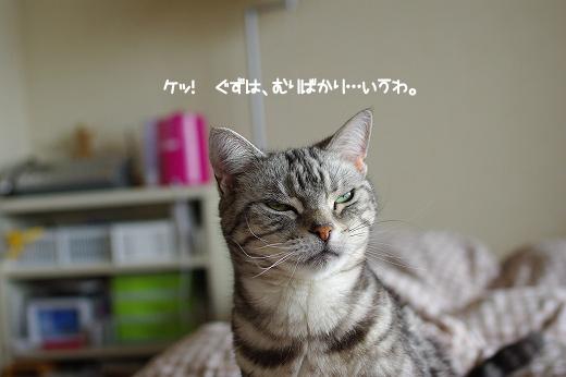 201105149.jpg