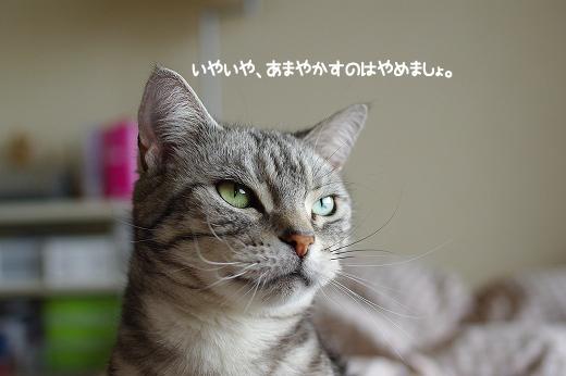 201105157.jpg