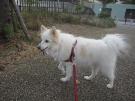shiro20110811a