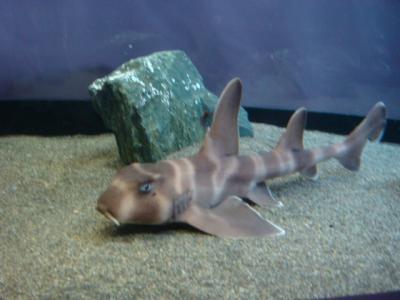 小さいサメ・・・