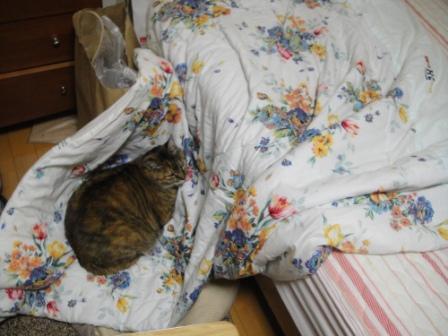 ベッドから落ちても寝ているトラ(@_@;)