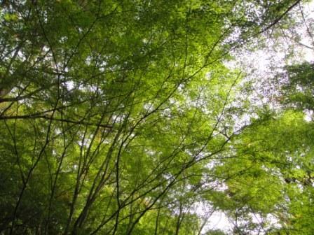 五月山公園にて森林浴