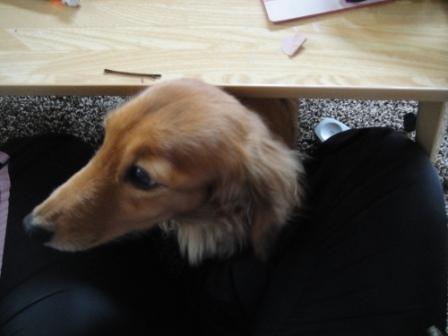 テーブルの下からニョキ