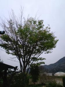 CA3G0066_20110422083916.jpg