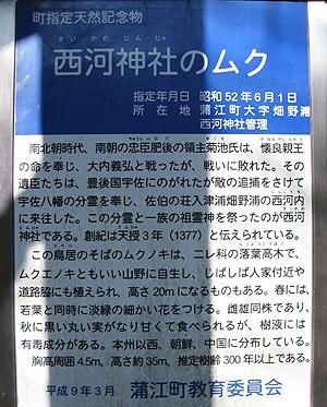 saikawa2.jpg