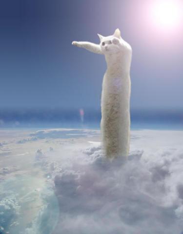 7-a-long-cat07.jpg