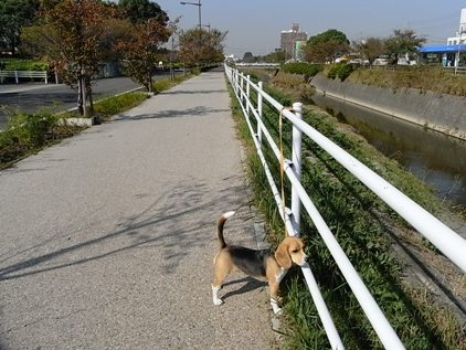 散歩 RIMG0045