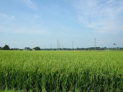 のどかな田園風景1