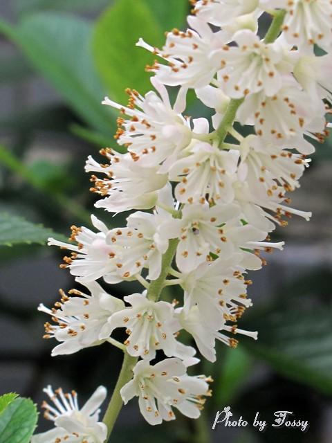 白い花 部分