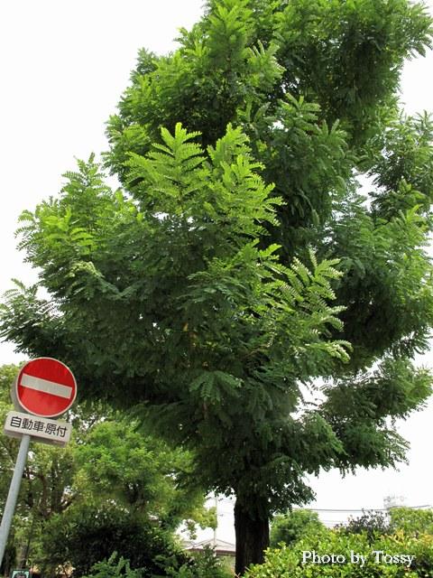 この木なんの木3