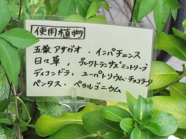 使用した植物 プレート