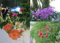 近所の庭の花