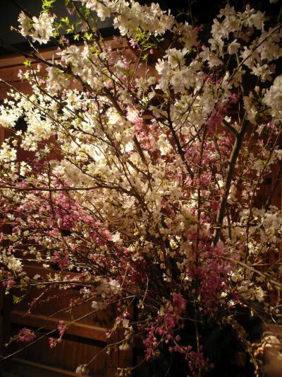 桜(勝道、染井吉野、紅彼岸桜)1