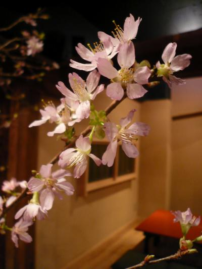 桜(富士桜)1