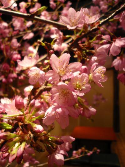 桜(修善寺桜)3