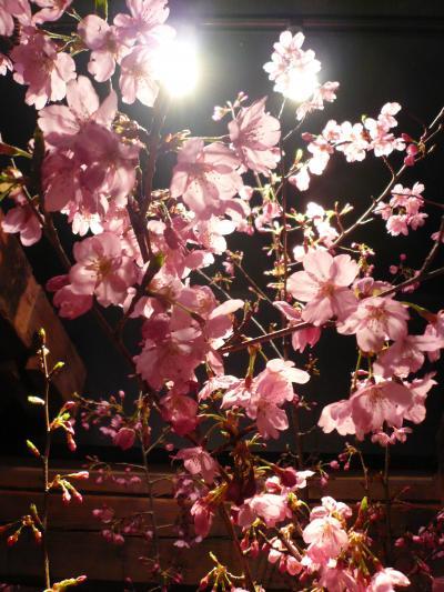 桜(修善寺桜)2
