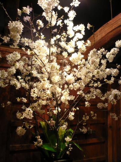 桜(吉野)1